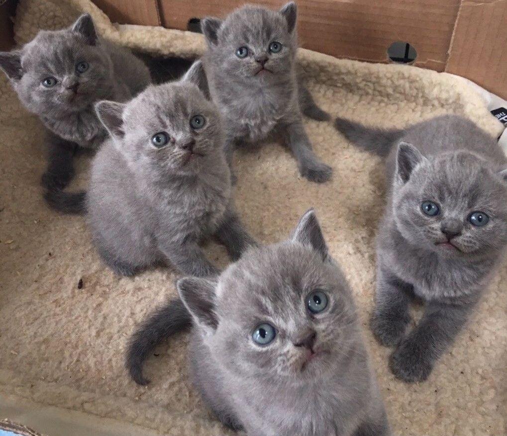 Các chú mèo con luôn rất đáng yêu