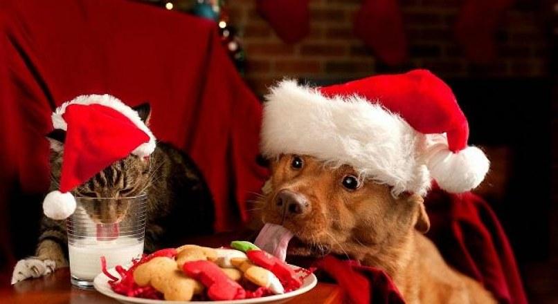 Bộ Ảnh Động Vật Ngộ Nghĩnh Đón Noel