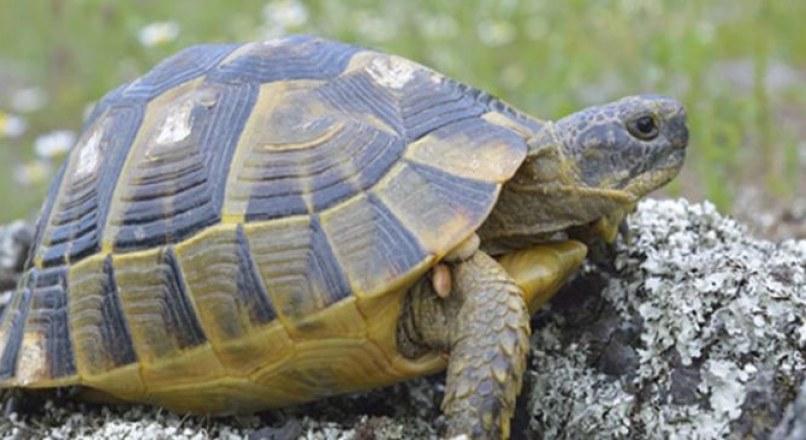 Mơ thấy con rùa đánh con gì trúng lớn? Điềm gì?