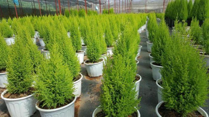 Top 7 cây trồng phong thủy cho mệnh Mộc