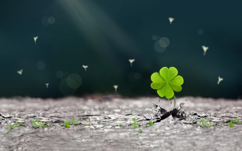 10 Cách Xua Đuổi Tà Khí Thu Hút May Mắn Cho Mọi Người