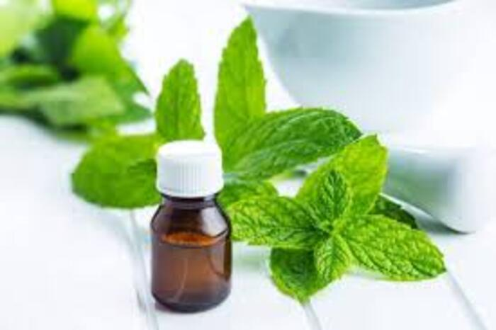 Bạn cũng có thể sử dụng loại thảo dược này để làm thư giãn tinh thần nhanh chóng
