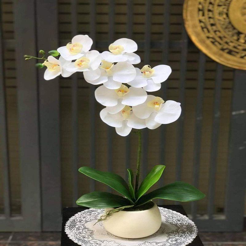 Hình 1: Lan hồ điệp là loài hoa tượng trưng cho sự giàu có, sung túc