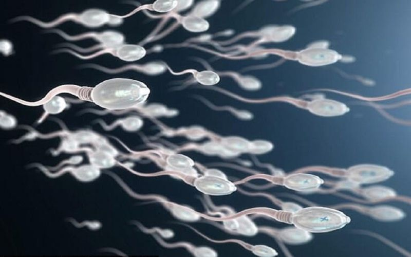 Hình 1: Chất lượng tinh trùng tốt càng có cơ hội thụ thai