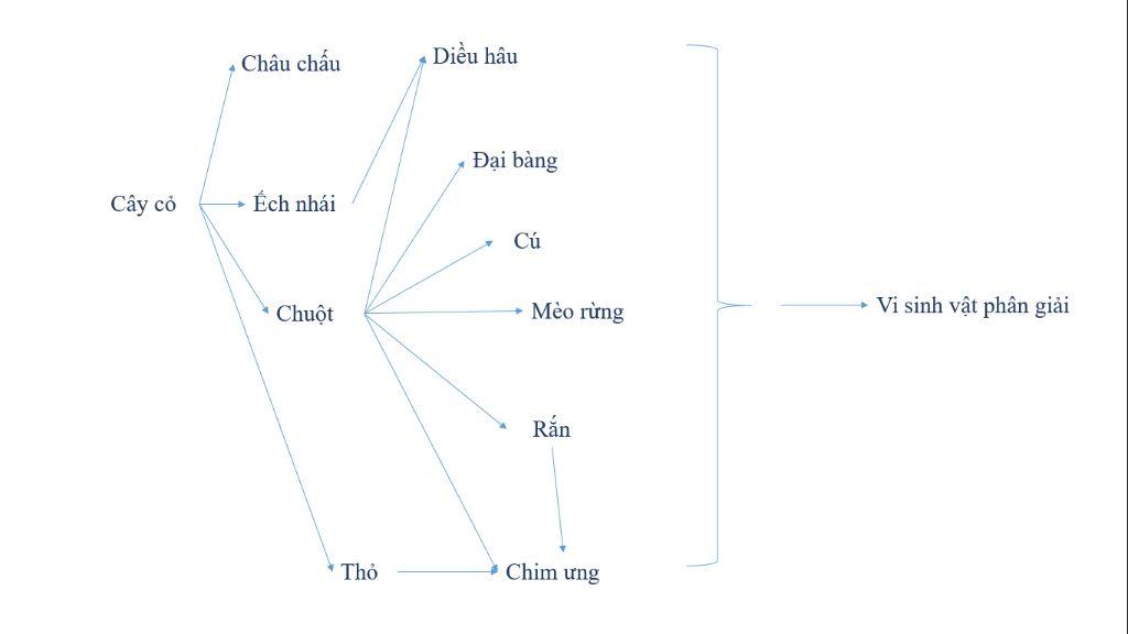 1-cho-mot-he-sinh-thai-co-cac-sinh-vat-tho-ga-cao-de-ho-dieu-hau-cay-co-vi-khuan-hay-viet-luoi-t