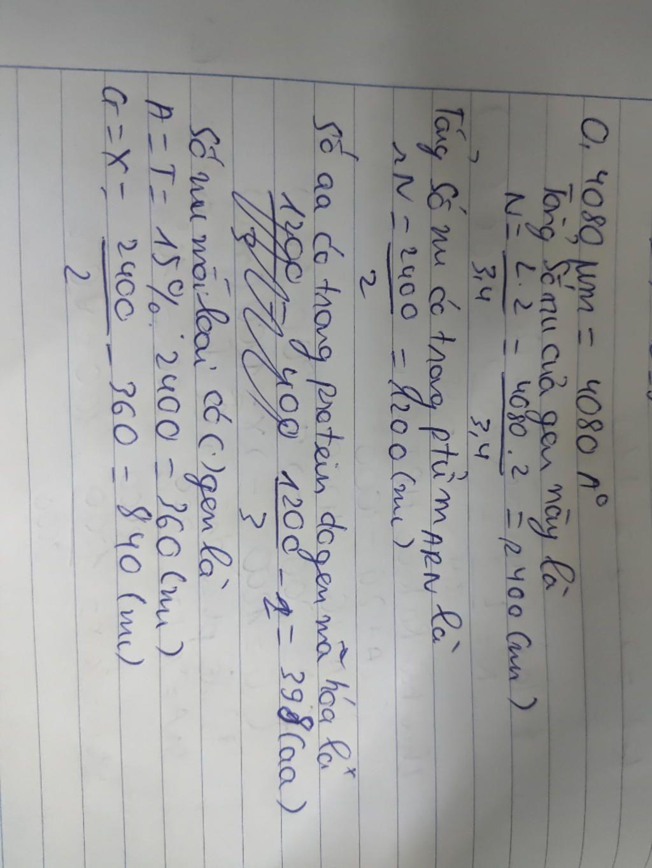 1-mot-gen-dai-0-4080-micromet-co-chua-nu-loai-a-chiem-15-trong-tong-so-nu-tinh-a-phan-tu-protein