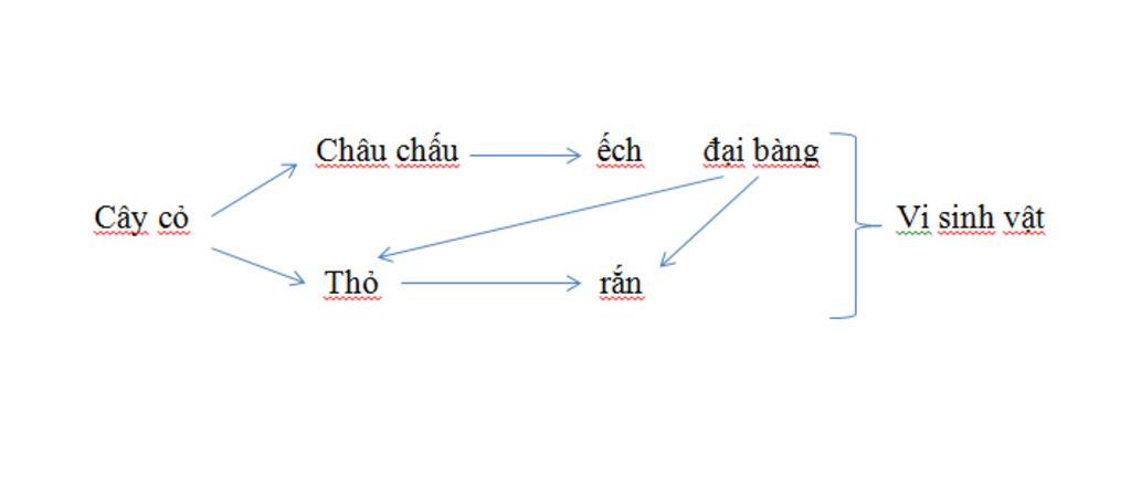cho-quan-a-sinh-vat-co-cac-loai-sau-cay-co-vi-sinh-vat-con-ech-con-tho-chau-chau-dai-bang-ran-ch