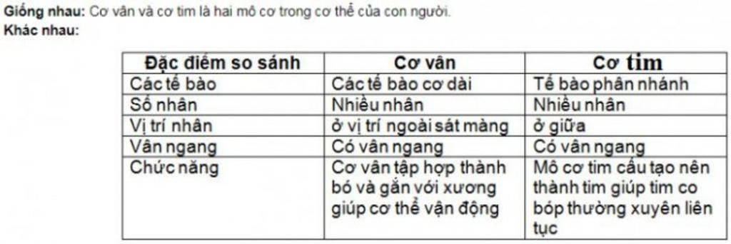 diem-giong-nhau-giua-hoat-dong-cua-co-tim-so-voi-hoat-dong-cua-co-van-a-hoat-dong-theo-quy-luat