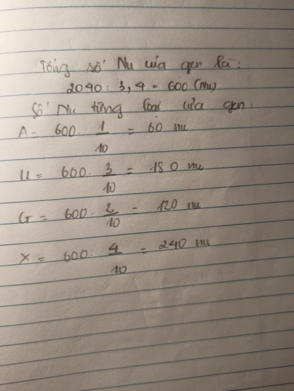 mot-phan-tu-marn-co-chieu-dai-2040-a-do-va-ti-le-a-u-g-1-3-2-4-tinh-so-nucleotit-moi-loai-cua-ma