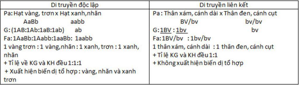 so-sanh-ket-qua-lai-phan-tich-f1-trong-hai-truong-hop-di-truyen-doc-lap-va-di-truyen-lien-ket-ne